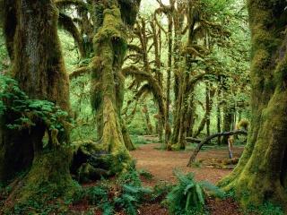Moss Woods