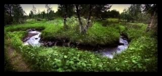 Sheer Creek Forest