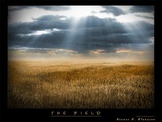 Sun Shine Field