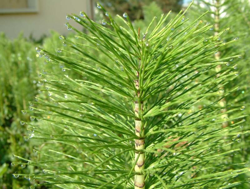 Kal manach d hiver semaine du 16 au 22 janvier 2012 for Avoir une vie de baton de chaise