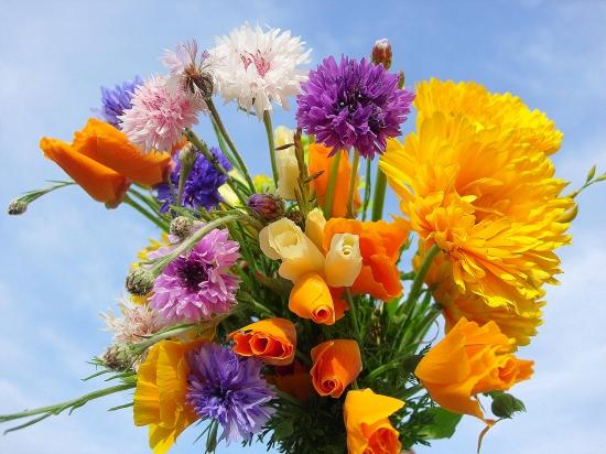"""Résultat de recherche d'images pour """"image bon samedi fleurs"""""""