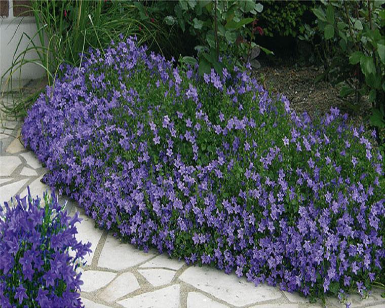 Plantes exterieur sans entretien top plante verte for Plante de jardin sans entretien