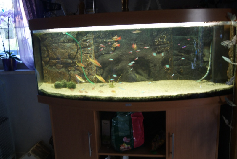 vend aquarium juwel 450 litres alsace. Black Bedroom Furniture Sets. Home Design Ideas