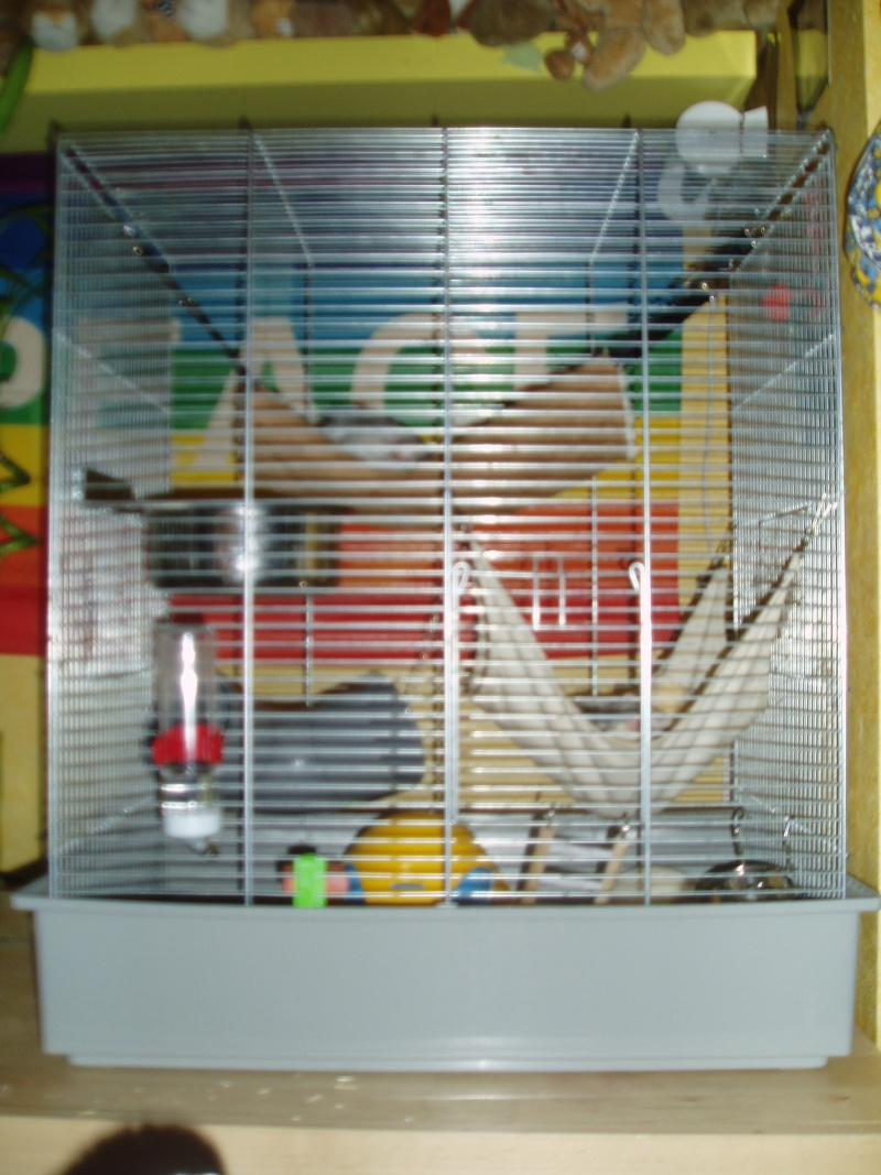 vends grande cage pour octodons rats souris hamsters petite annonce animaux saint pierre. Black Bedroom Furniture Sets. Home Design Ideas