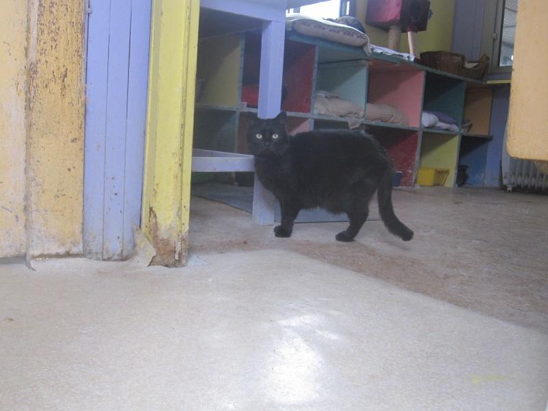 Une trane avec une chatte parfaite - Pornodinguecom