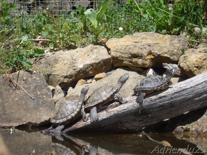 bache bassin tortue