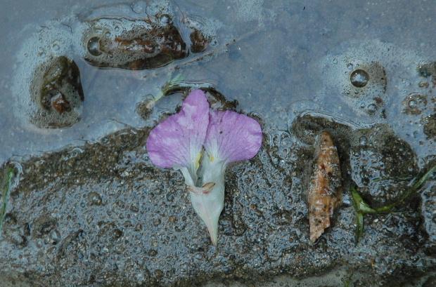 Image hébergée par servimg.com