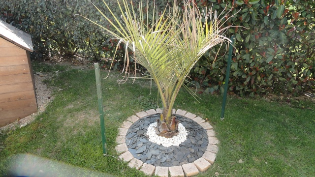 Le forum des fous de palmiers decoration butia for Decoration jardin palmier