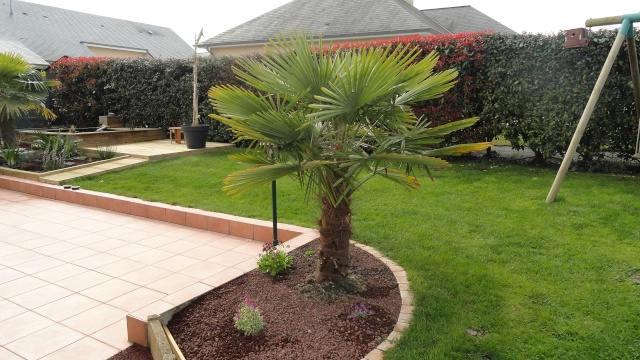 Photo jardin avec palmier 1st for Decoration jardin palmier