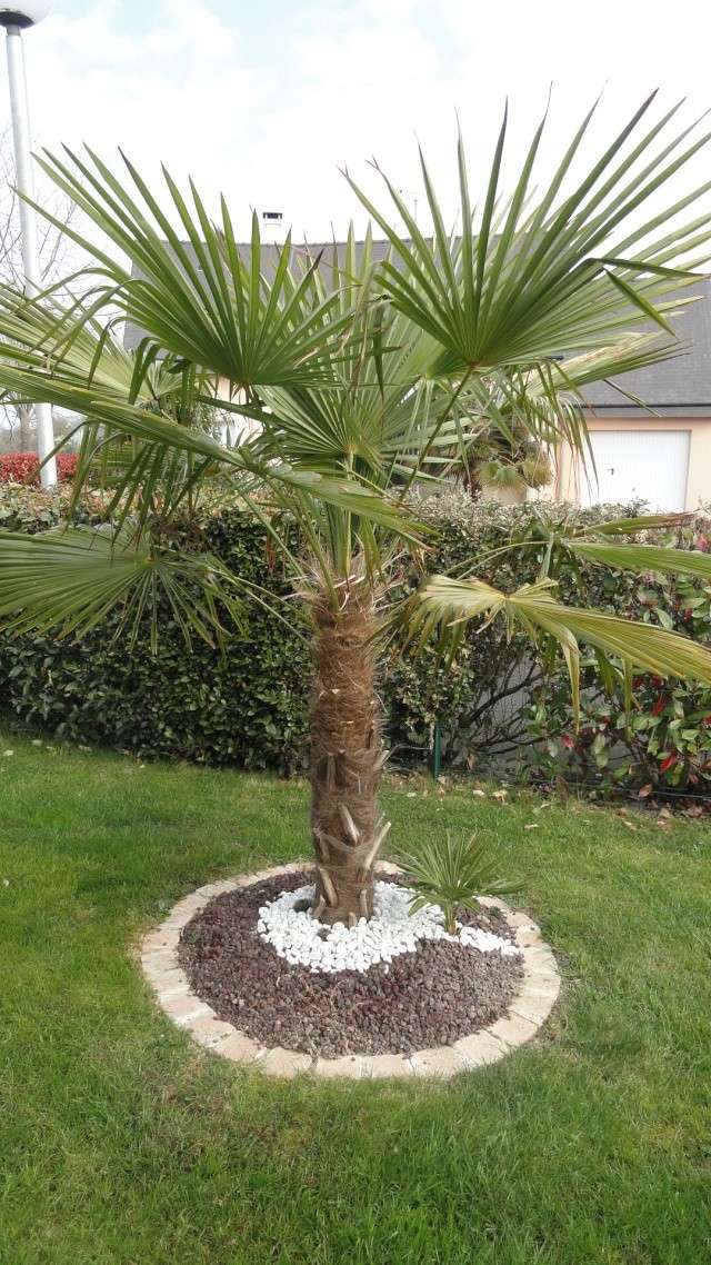 Photo jardin avec palmier for Decoration jardin palmier