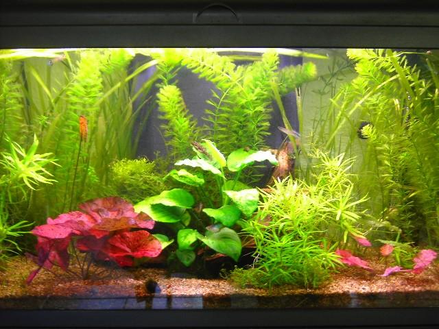 comment entretenir son aquarium naturellement page 2. Black Bedroom Furniture Sets. Home Design Ideas
