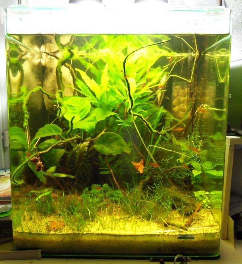 Nano dennerle 60l amazonien for Poisson aquarium 60l