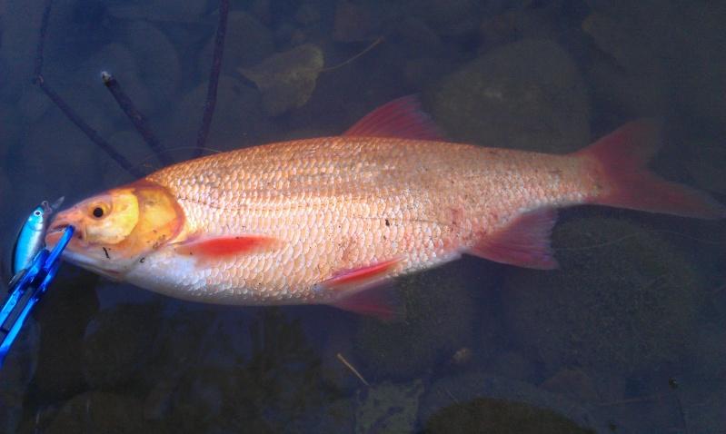 Comment p cher le poisson rouge for Vente poisson rouge toulouse