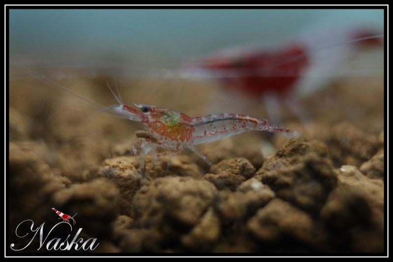 Aquariophilie discus attitude forum et blog sur le for Site aquariophilie