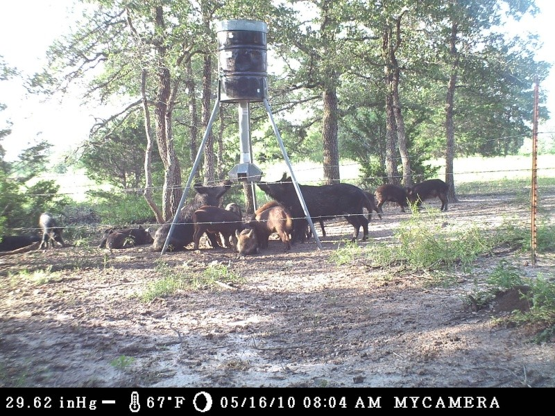 Best route for protein feeders - TexasBowhunter com Community