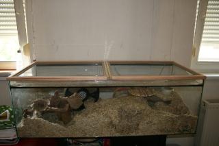 Mon couvercle de terra et de beaux tages en verre par for Couvercle pour aquarium