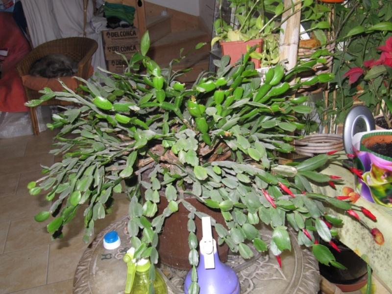 Plantes grasses - Plantes grasses entretien ...