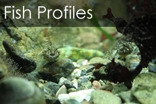 Fish Profiles
