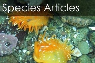 Species Articles