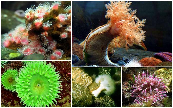 Corals & Sessile Invertebrates