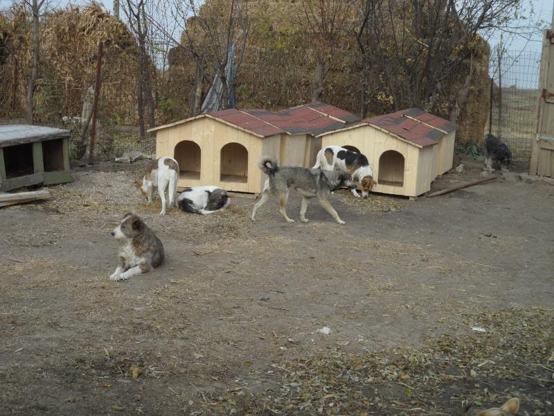 Point des niches a changer pour les chiens pour les chiens de lenuta page 2 - Niche pour chien originale ...