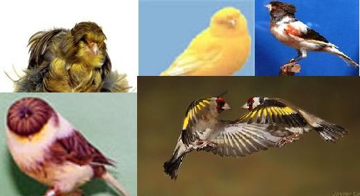 As Nossas Aves