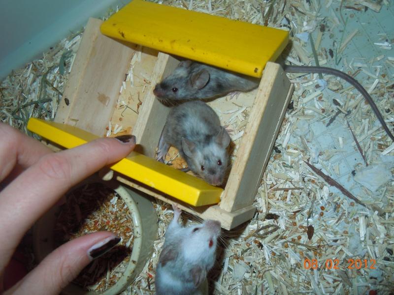 sujet les souris chez justine le forum sur la souris domestique. Black Bedroom Furniture Sets. Home Design Ideas