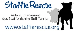 Staffie Rescue