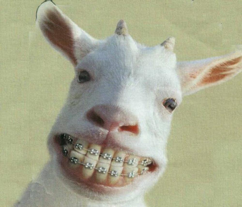http://i42.servimg.com/u/f42/16/22/83/20/dentis10.jpg