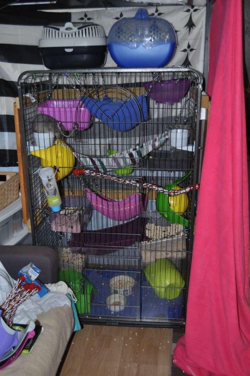 bac cage perfect. Black Bedroom Furniture Sets. Home Design Ideas