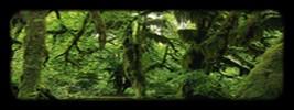 La Forêt Numëillel