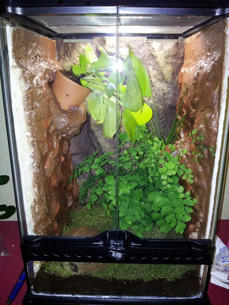 quelles plantes pour un terrarium tropical 30x30x45. Black Bedroom Furniture Sets. Home Design Ideas