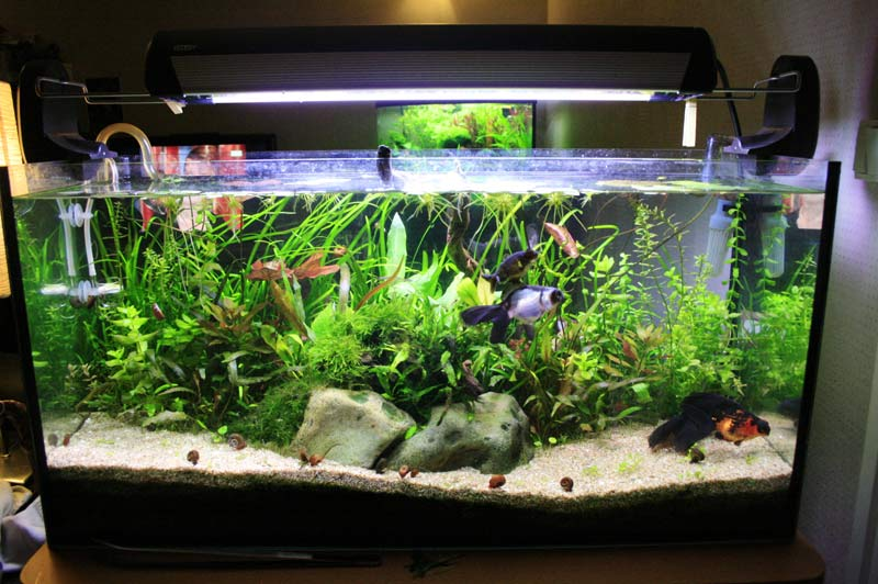 Vend donne rampe t5 2x24w bac 96l poissons rouges 92 for Donne aquarium