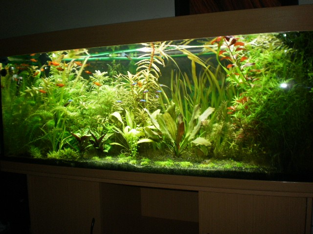 aquarium 400 litres bac plant. Black Bedroom Furniture Sets. Home Design Ideas