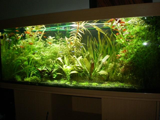 Aquarium 400 litres bac plant for Aquarium bac