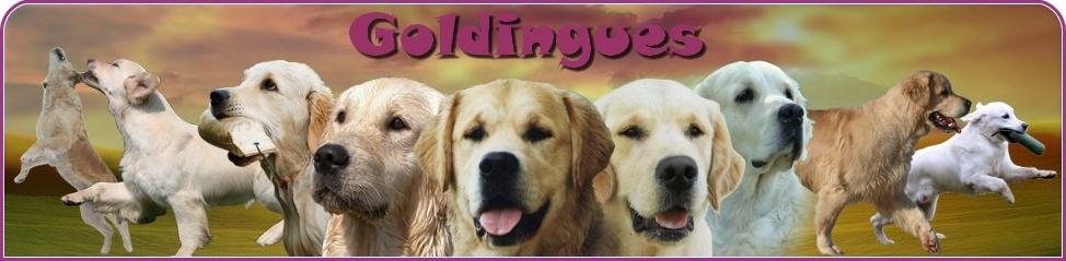 Forum : Goldingues