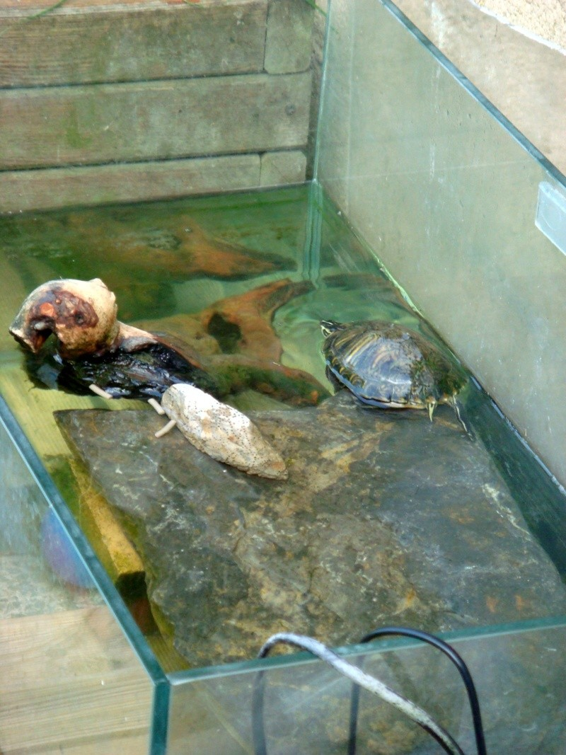 D co bassin interieur pour tortues d eau nanterre 31 for Bassin exterieur pour tortue
