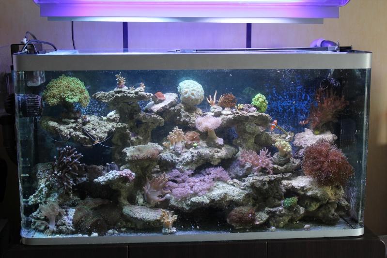 Aquarium osaka 320l eau de mer for Achat aquarium eau de mer