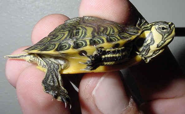 La bont de dieu et une petite tortue - Lampe chauffante tortue ...