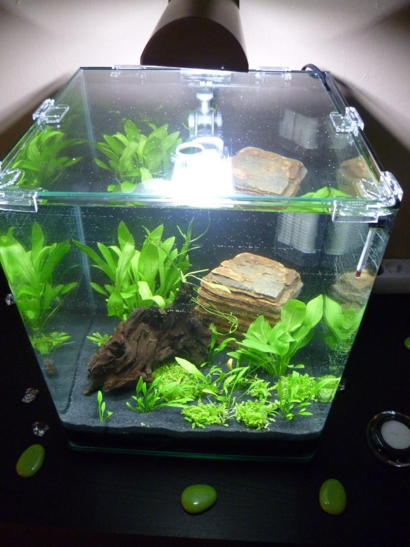Demarage aquarium nano 30 litres for Aquarium 30 litres pas cher