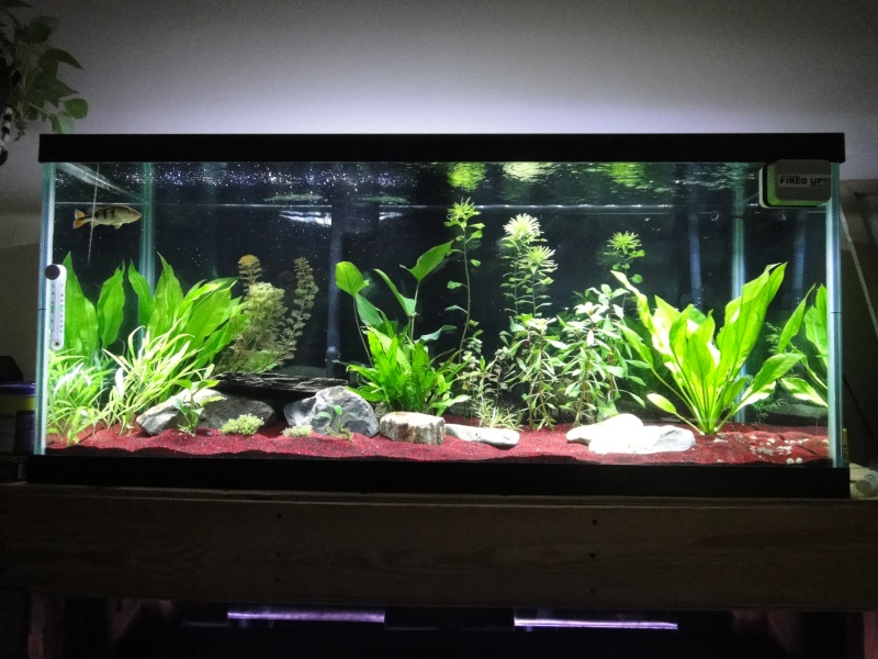 planted 75 substrate