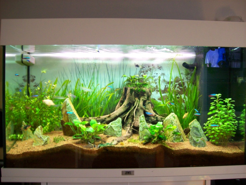 Mon bac plant for Plante aquarium eau douce