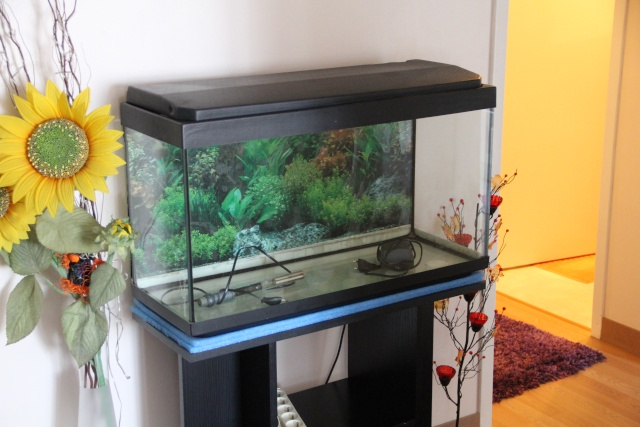 vend aquarium 100l 78. Black Bedroom Furniture Sets. Home Design Ideas