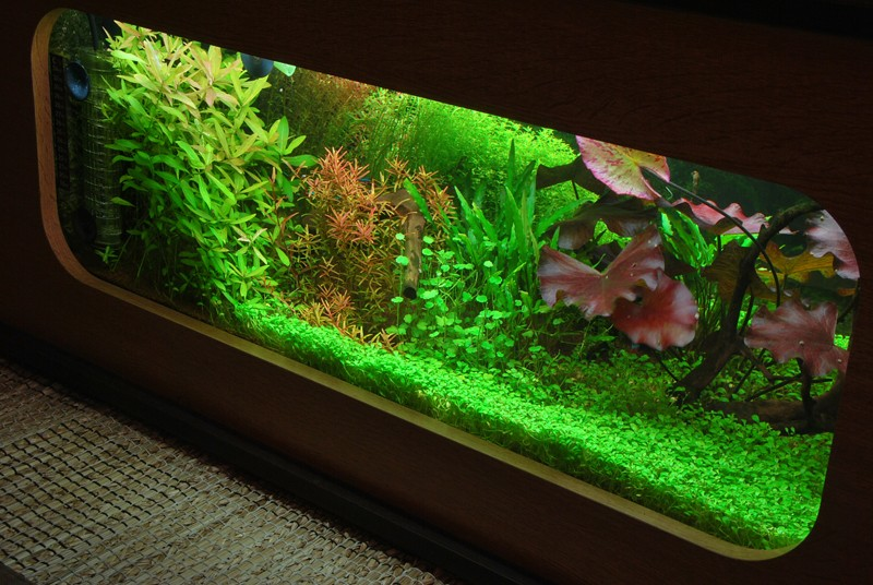 aquarium table basse nouvel hardscape kawazdim. Black Bedroom Furniture Sets. Home Design Ideas