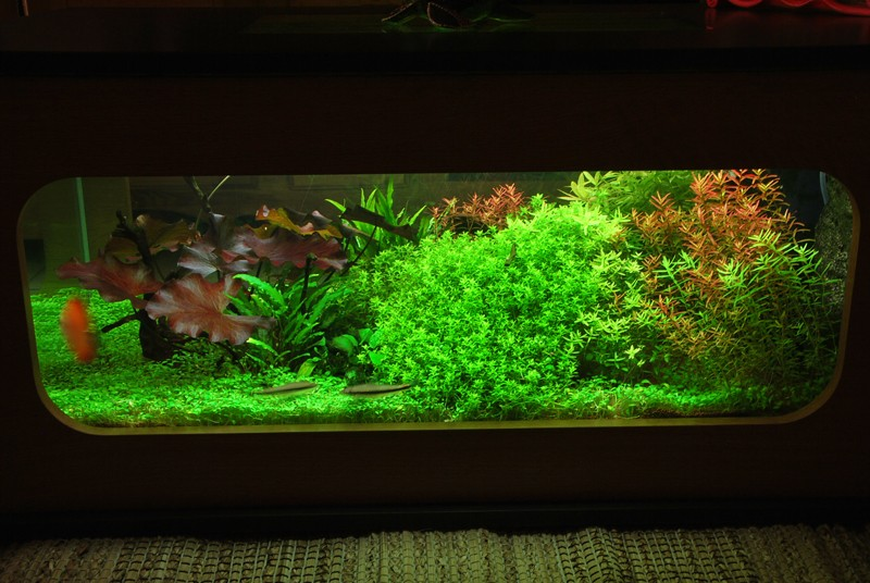 aquarium table basse nouvel hardscape. Black Bedroom Furniture Sets. Home Design Ideas