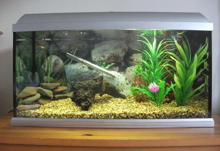 idée décoration aquarium 60l